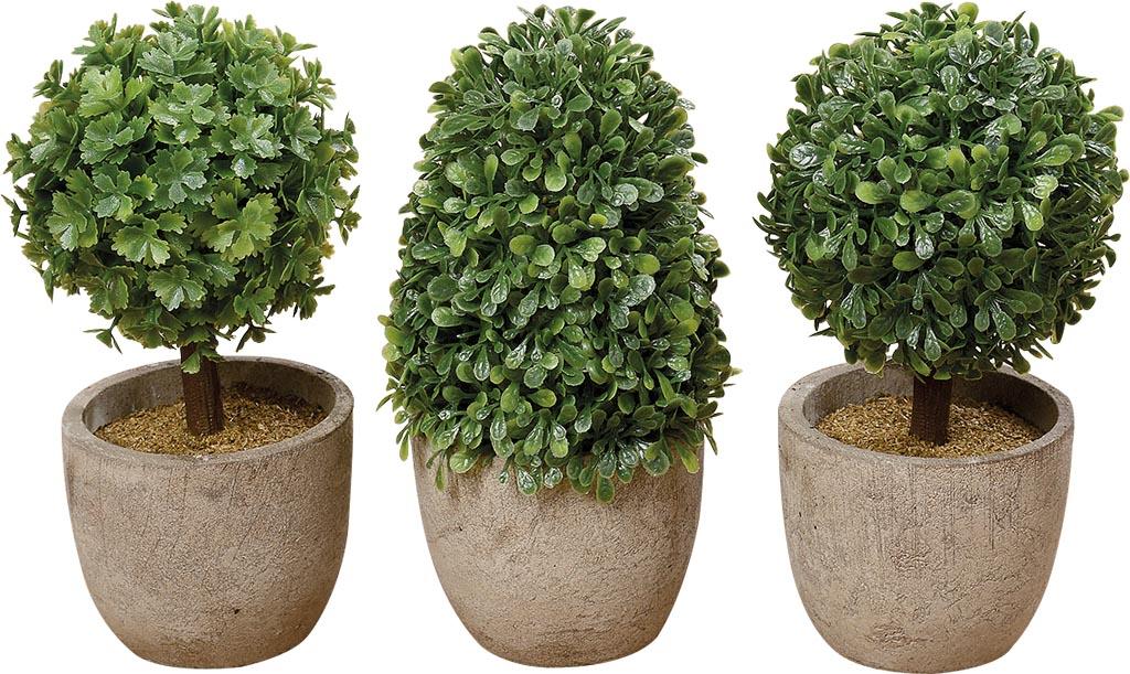 Alberello bosso con vaso 3 modelli assortiti cestenolvetri for Bosso vaso